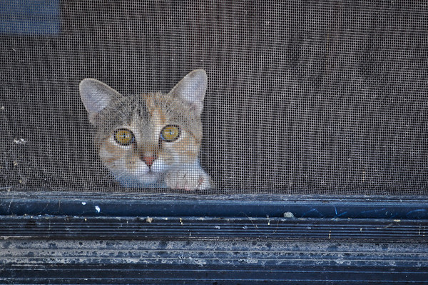 Kitty is spying on us.